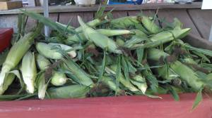 Rushmore Corn